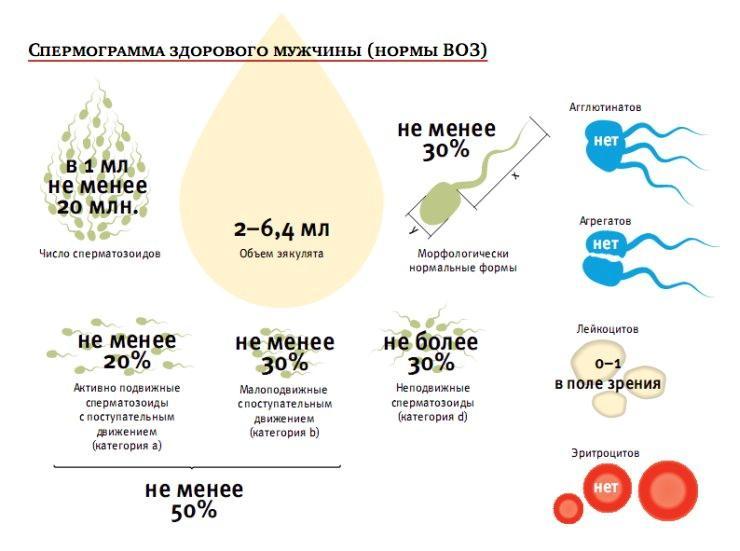 Показатели спермограммы здорового мужчина