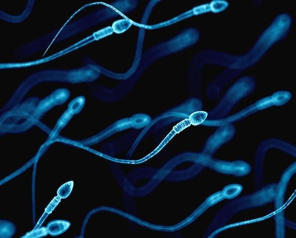 Какие продукты повышают количество спермы