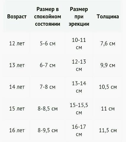 Длина члена в различном возрасте