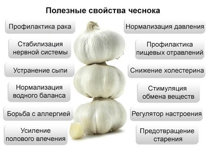 Полезные свойства чеснока