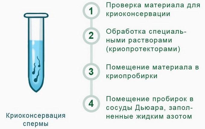 Этапы проведения криокосервации спермы