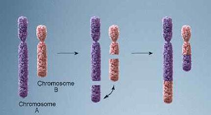 Транслокация хромосом
