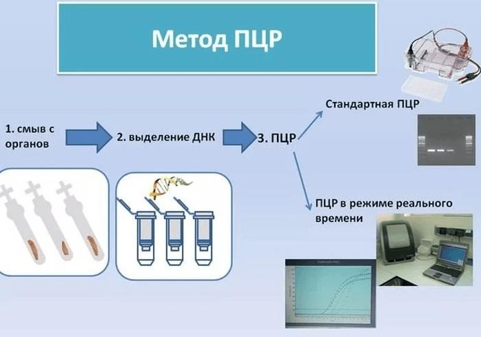 Краткая схема метода ПЦР