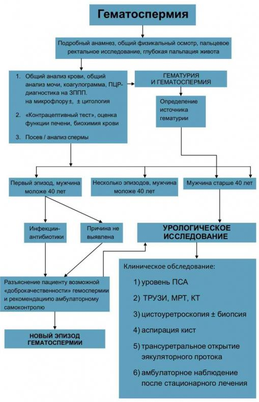 Диагностика гематоспермии