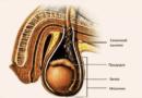 Что такое фуникулит и как его вылечить