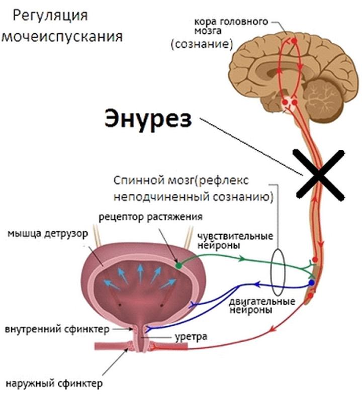 У молодых простатит проходит качественная сперма при простатите