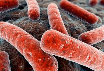 Окрашенная палочка Коха под электронным микроскопом