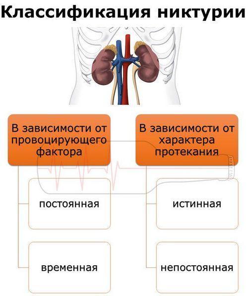 Классификация никтурии