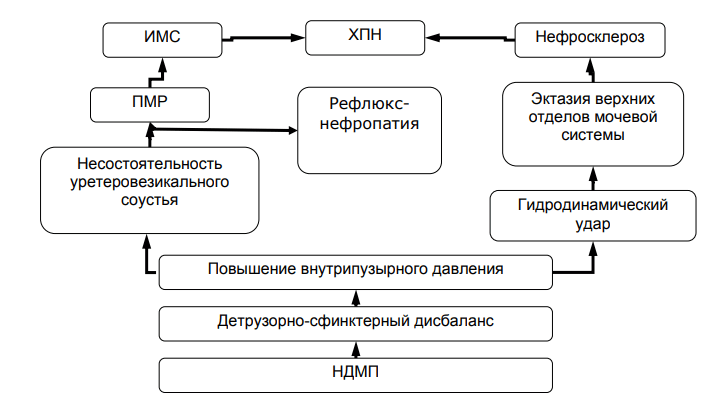 Схема развития осложнений при нейрогенной дисфункции мочевого пузыря (НДМП)