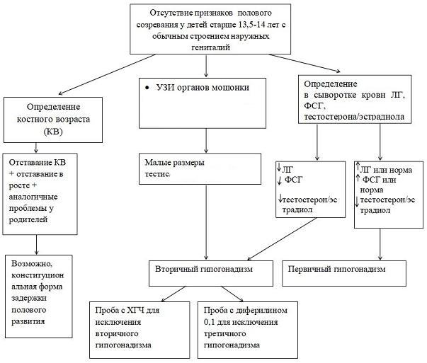 Общий алгоритм диагностики гипогонадизма у детей