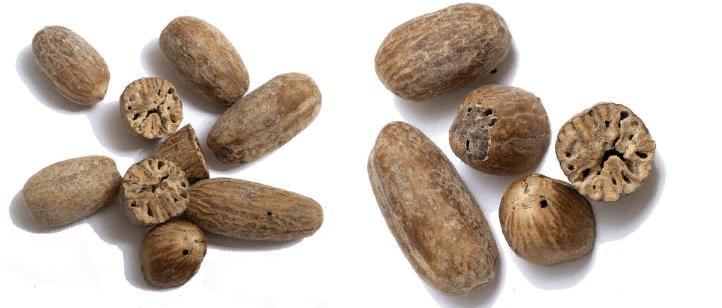 Мускатный орех Papua, в котором жуки прогрызли ходы