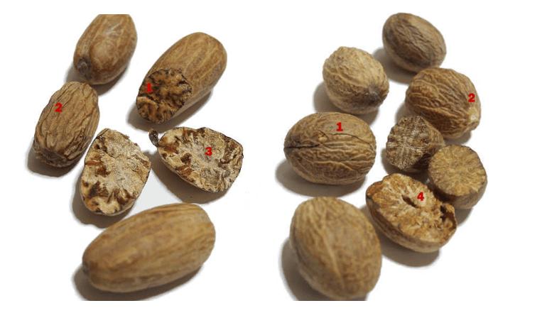 Сравнение мускатных орехов