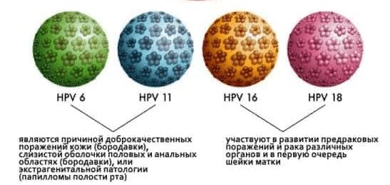 Наиболее часто обнаруживаемые типы ВПЧ