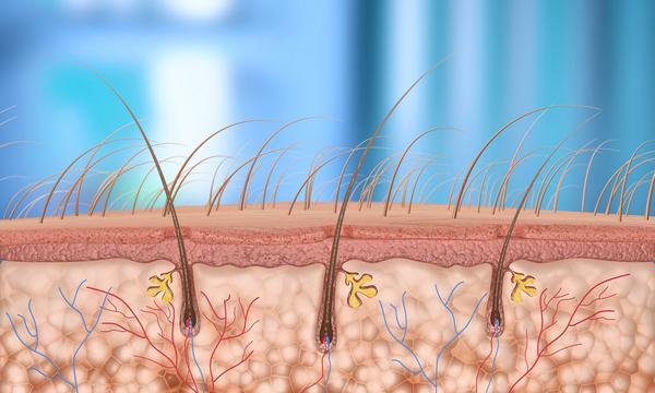 Волоски