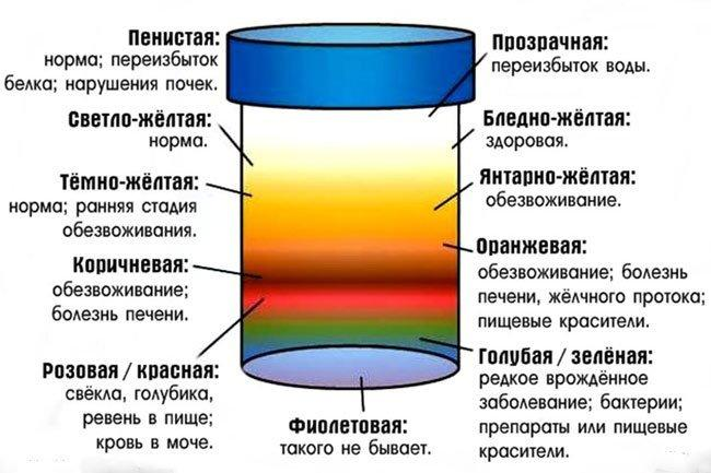 Цветовая палитра мочи