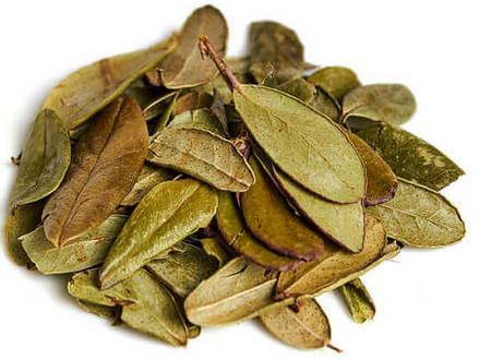 Сушеные листья брусники