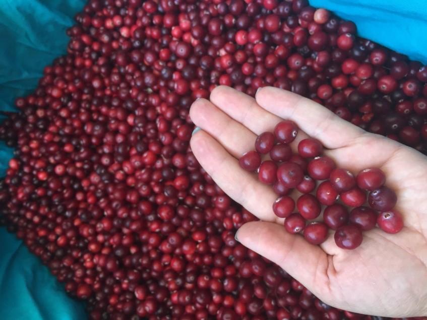Спелая ягода