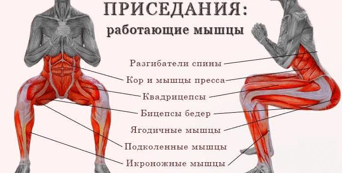 Мышцы, работающие во время приседаний