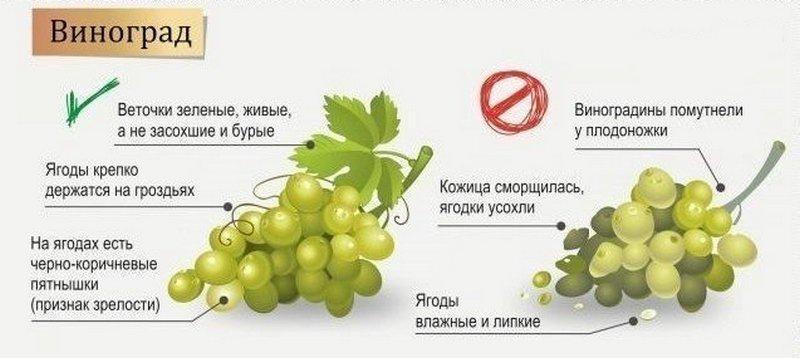 Признаки созревшего винограда